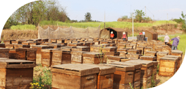 规范蜂厂管理