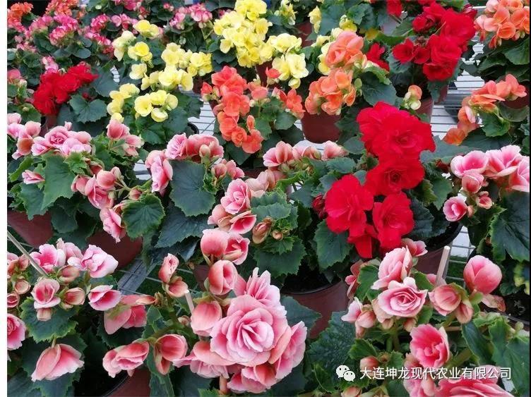 鲜花伴您迎新春!