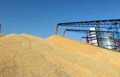 帝強水分容重儀——小麥收儲的好幫手