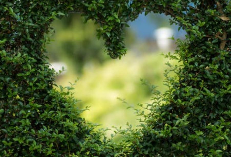 绿化的意义