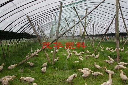 茂華塑料-養殖專用膜