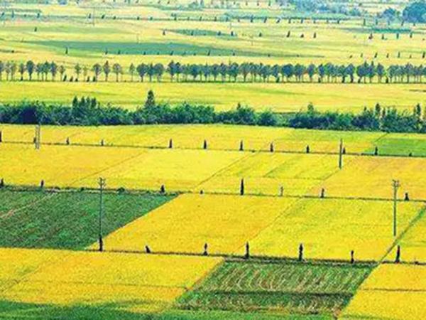 高標準農田建設