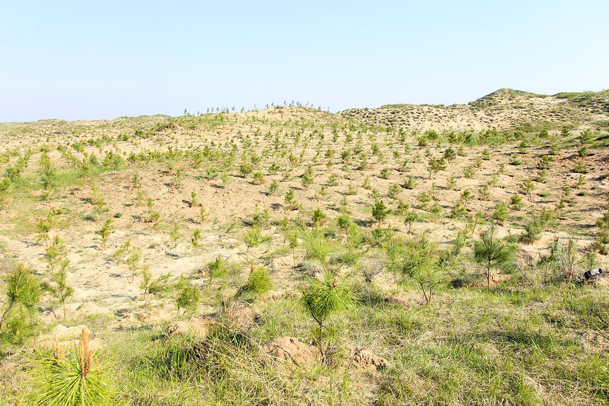 生態造林工程