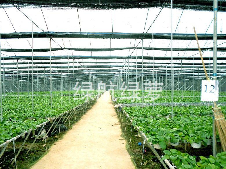 揭秘綠航綠蘿種植方式