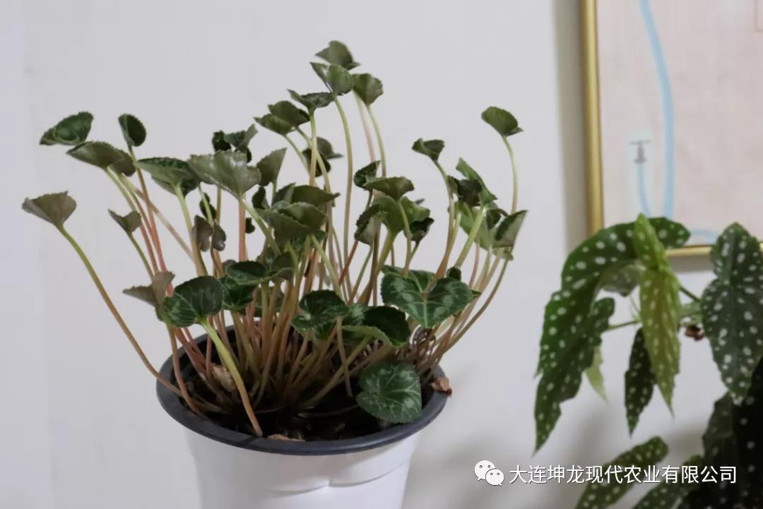高溫雨季植物如何安全度夏?養護秘籍奉上!