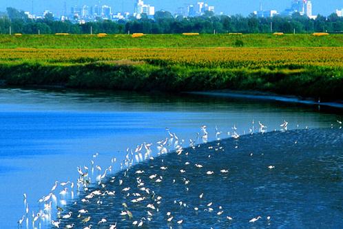 唐山臨港產業園區標準化廠房項目:預計開發110萬平米的標準化廠房,一期完成5萬平方米