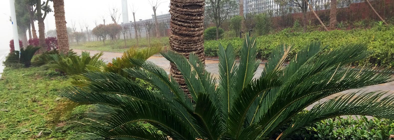 宜昌市東辰壹號景觀大道